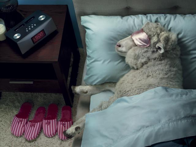 sheep-in-bed__medium_4x3